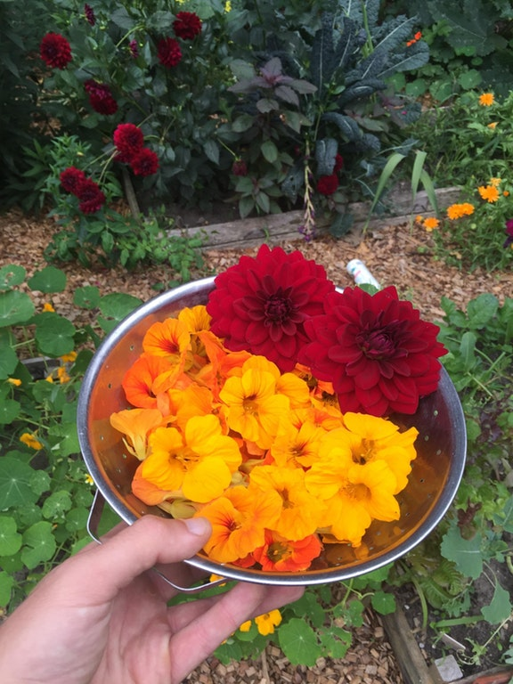 Nasturtium and Basil Summer Salad